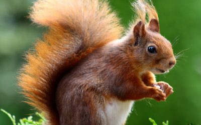 Are you smarter than a squirrel?